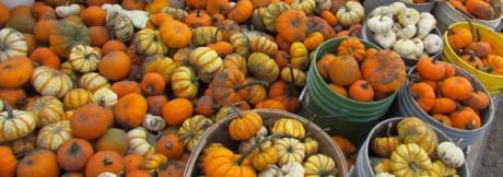 mini pumpkin on wagon